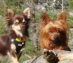 Emmas-mobile-Hundehüttes Avatar